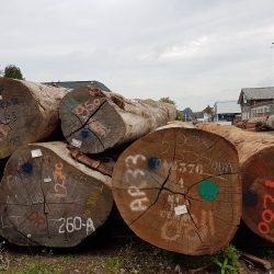 Azobe Nederland boomstammen